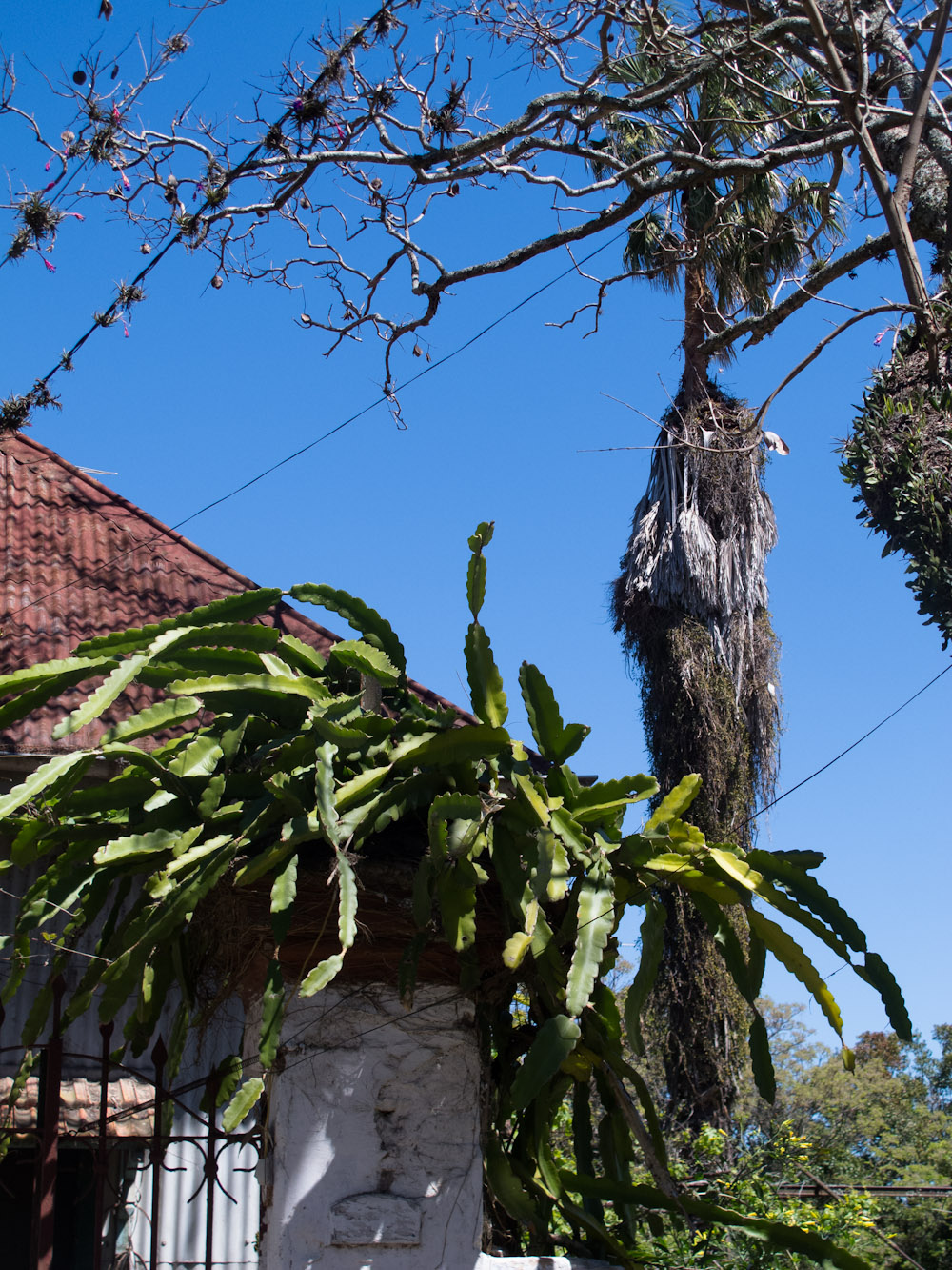Plantas encontradas en la isla. Foto
